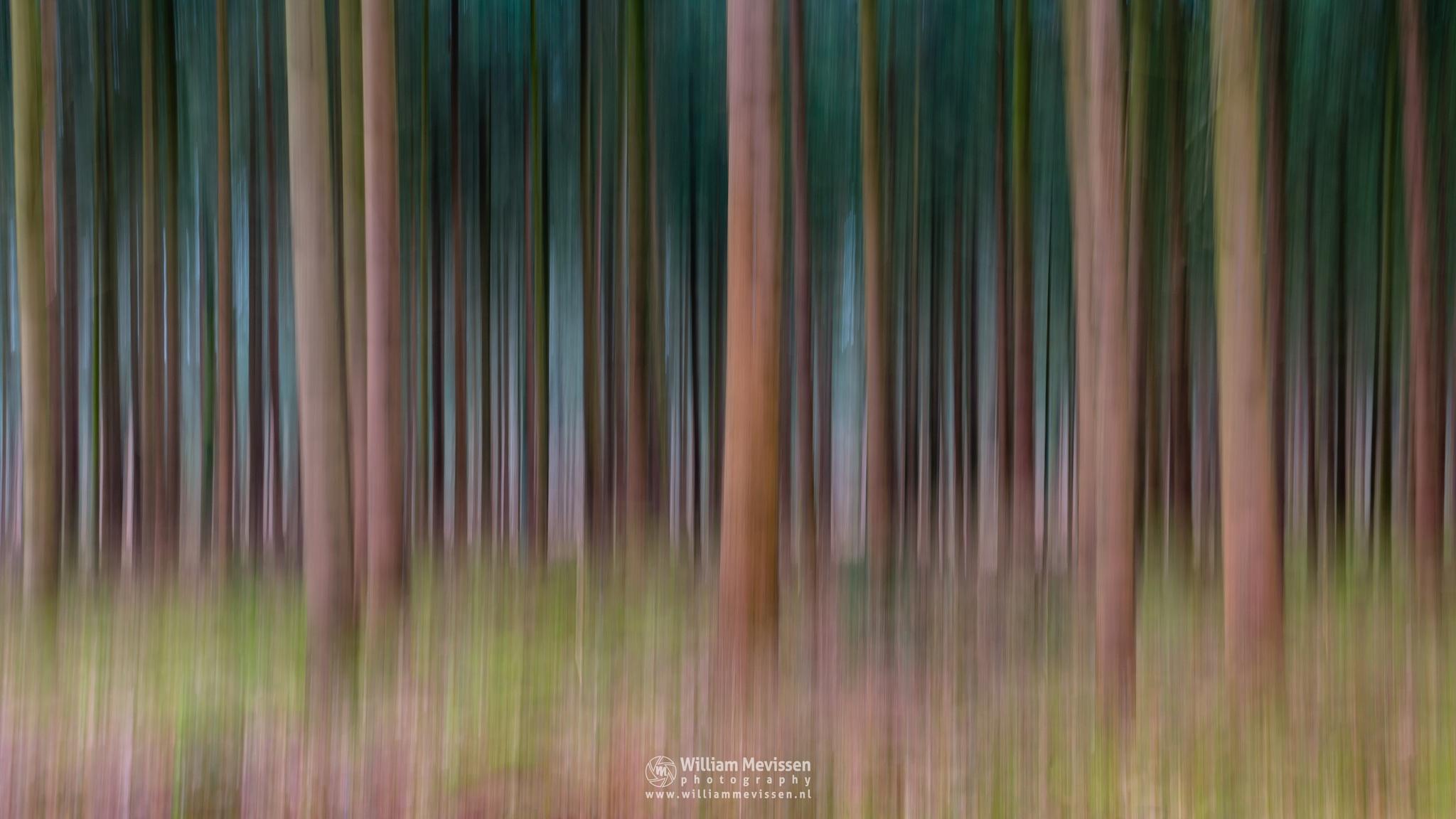 Photo in Abstract #geijsteren #oostrum #venray #landgoed geijsteren #landgoed #weichs de wenne #limburg #noord-limburg #nature #abstract #lines #trees #tree #light #geysteren #estate #nature reserve #forest #woods