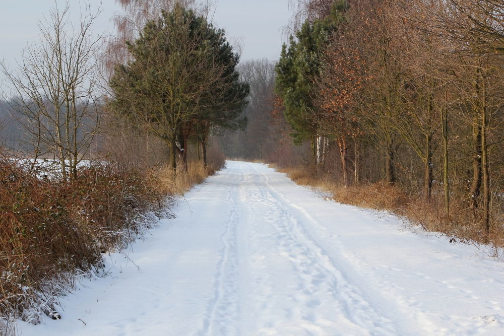 Photo in Landscape #snow #landscape #germany #spreewald
