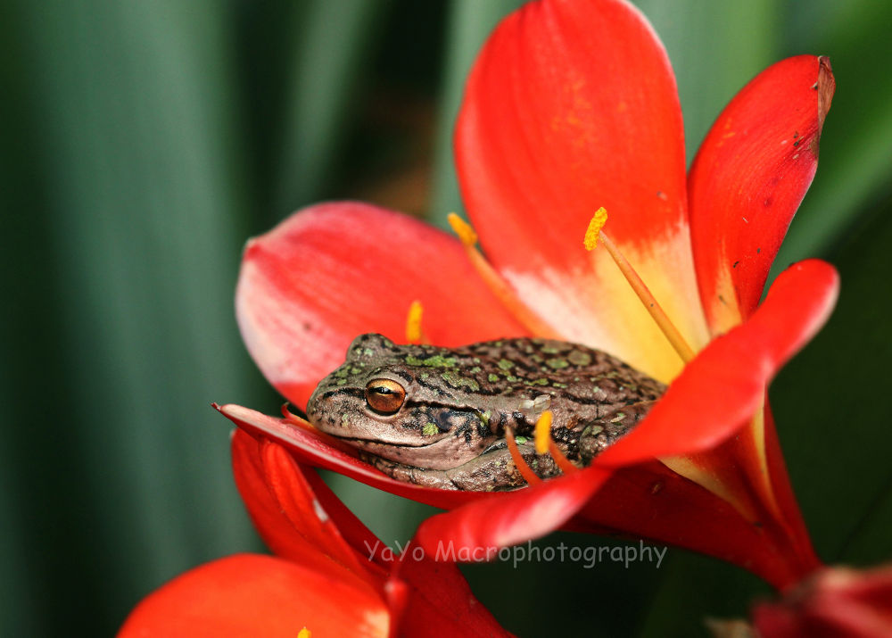 Photo in Macro #flower #nature #macro #animals