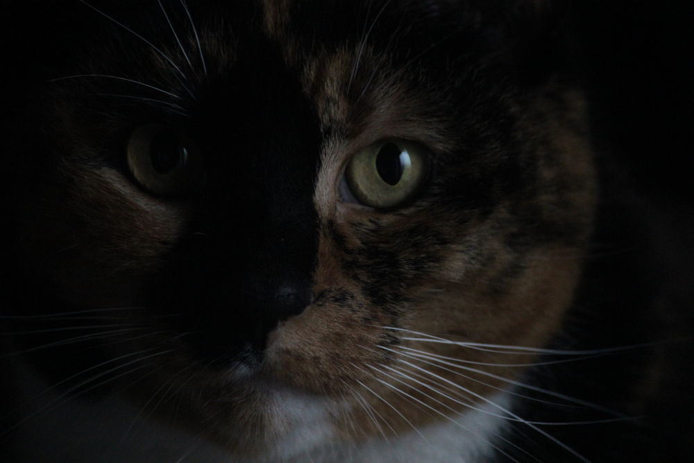 Photo in Nature #youpic #white #animal #love #beautiful #photography #black #photo #light #dark #sweet #nice #picture #nature #colour #cat #cats #cañón #colours #amazing #lovely #eyes #wonderful #brown #photos #animals #eos #pictures #600d