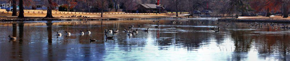 Photo in Random #park #water #blue #lake #duck #trees #geese #birds #pond #animals #lakeside park #mcpherson #kansas #ks #tyler elbert #picture perfect photography