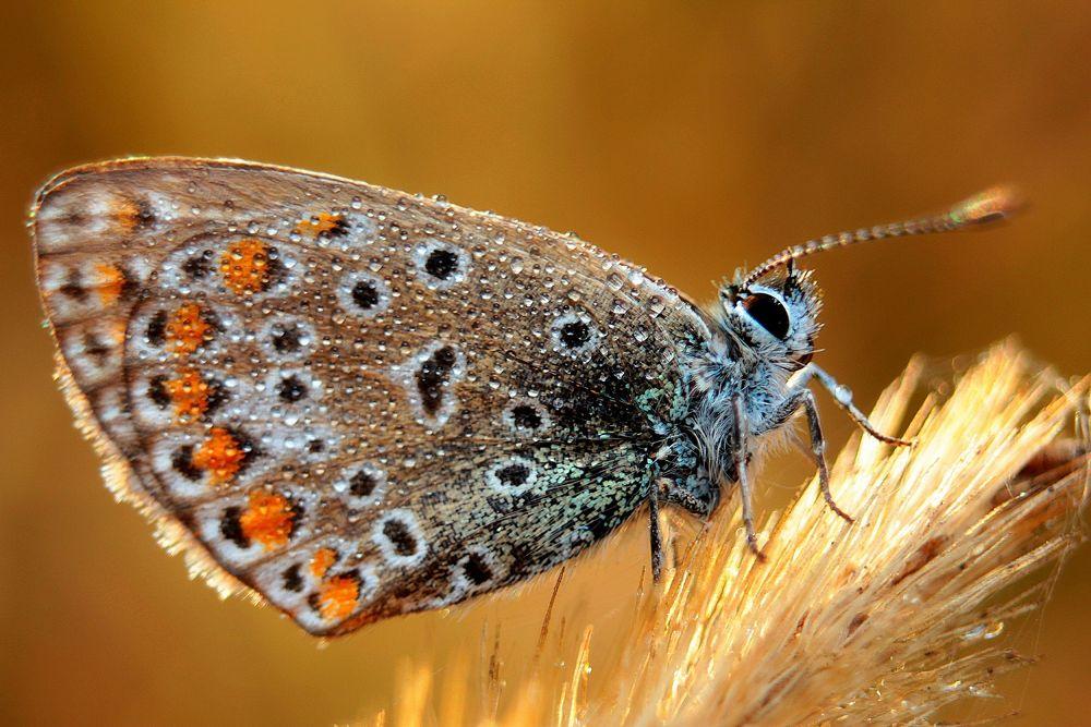 Photo in Macro #butterfly #dew #morning #morning dew