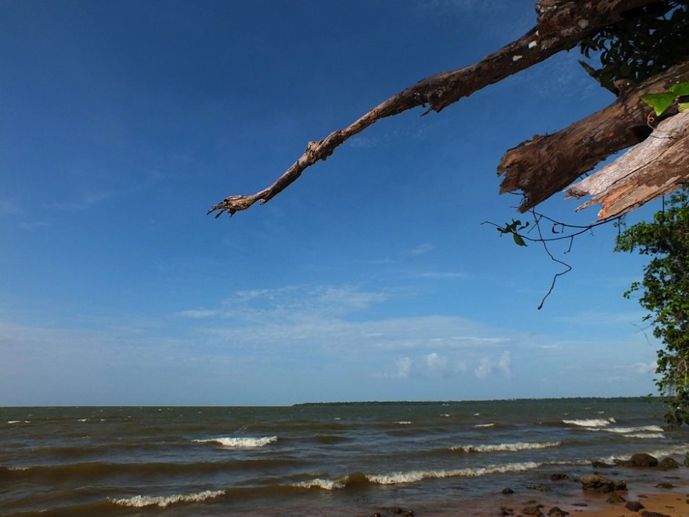 Photo in Random #pará #barcarena #caripi #caripy
