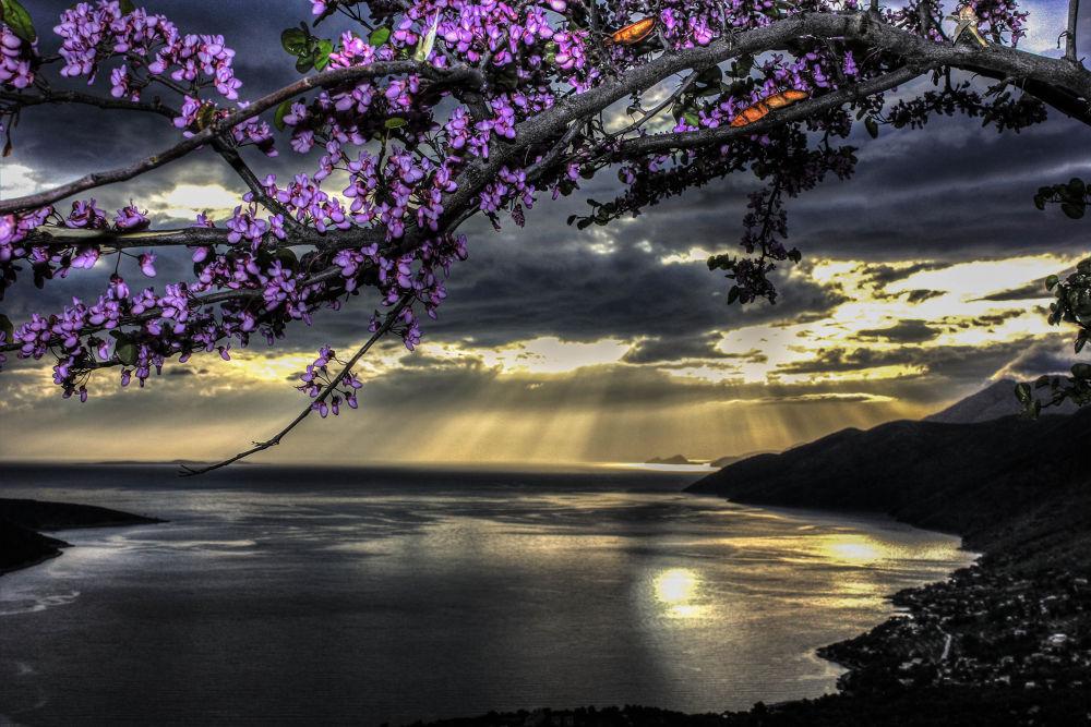 Photo in Random #porto #sunset #tree #greece #germeno