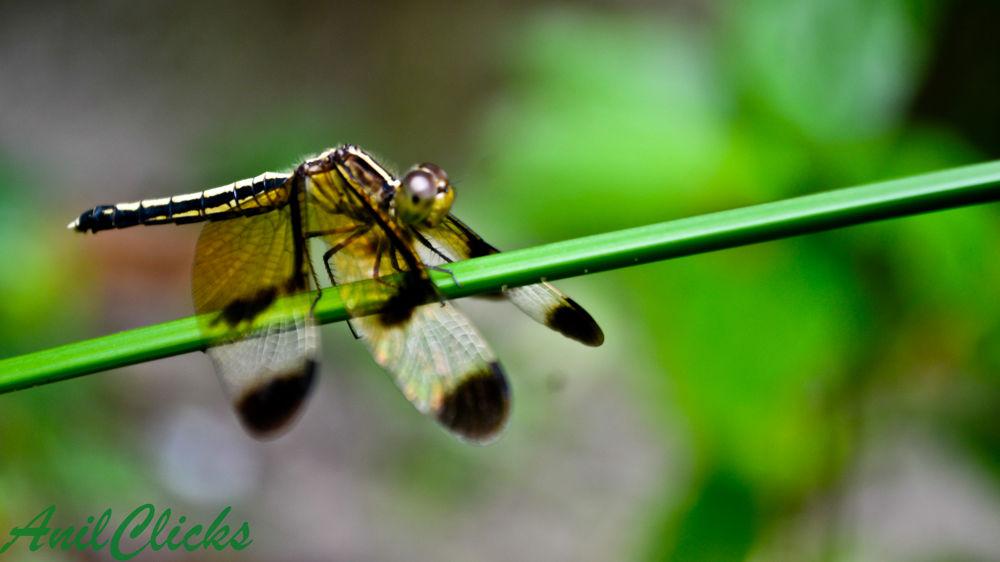 Photo in Macro #nature #macro #fly #kerala #anilclicks
