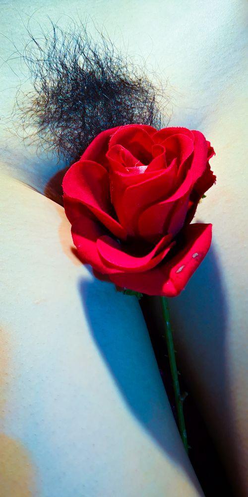 Photo in Random #erotic #juxtaposition #rose #flower #placement