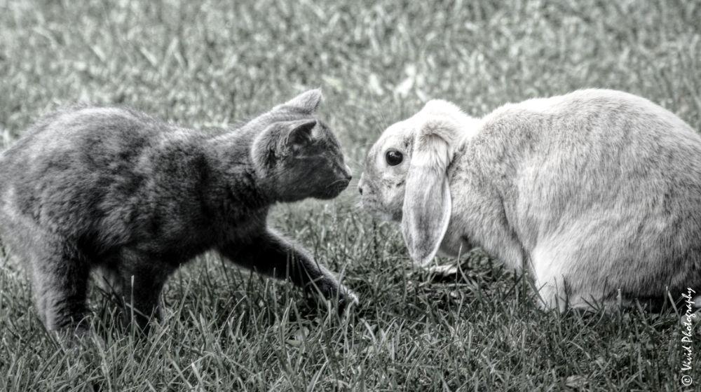 Photo in Animal #kitten #rabbit #meeting #nature
