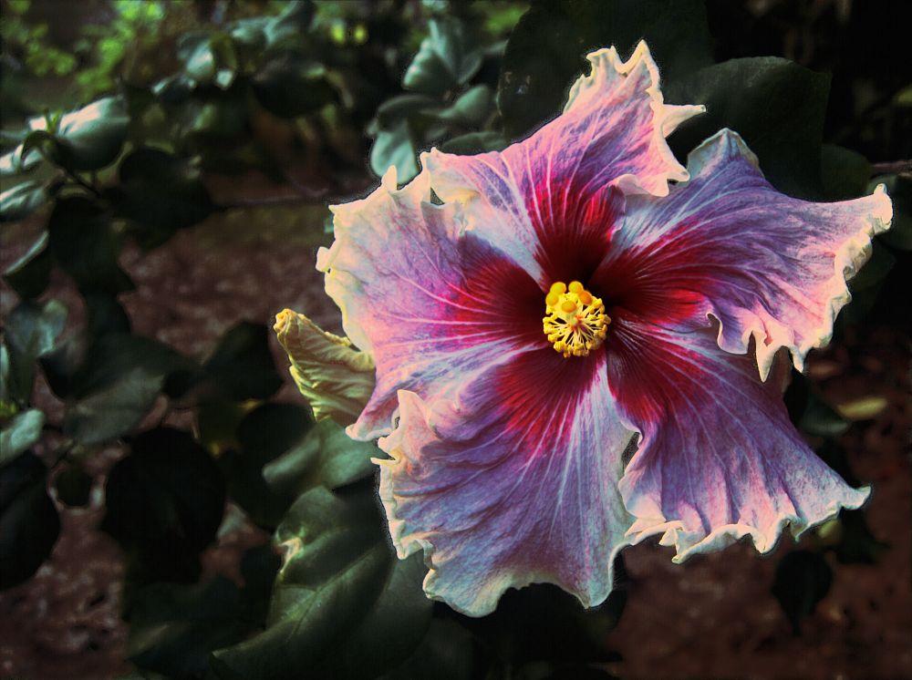 Photo in Nature #flowers garden floralperfectio