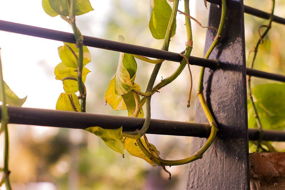 Photo in Nature #nature #naturephotography #greenery #blur
