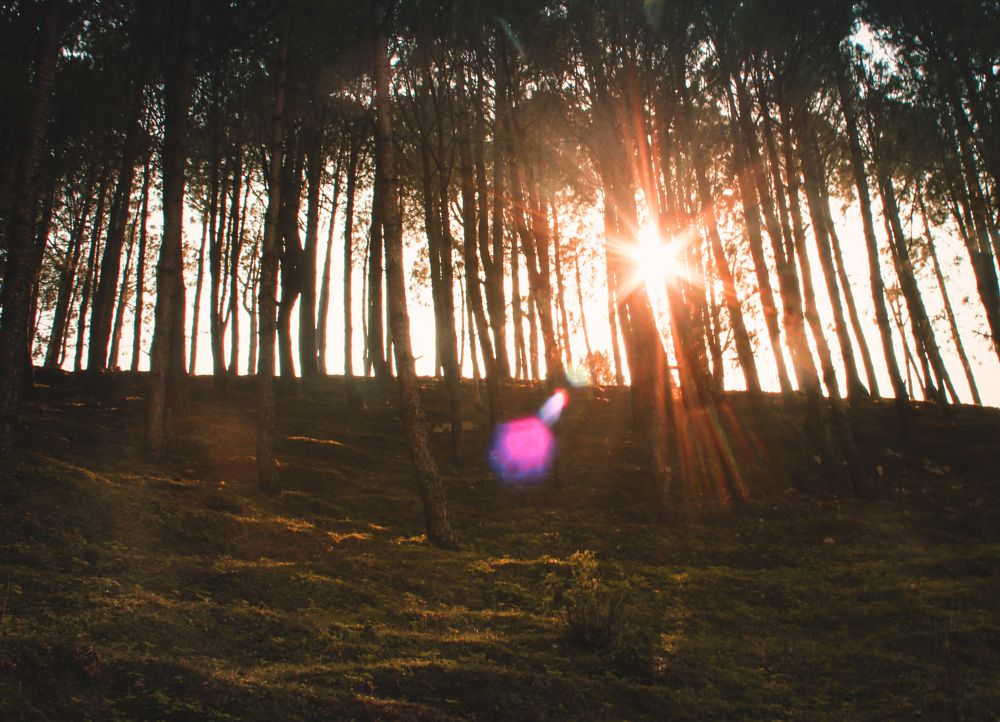 Photo in Random #sun forest