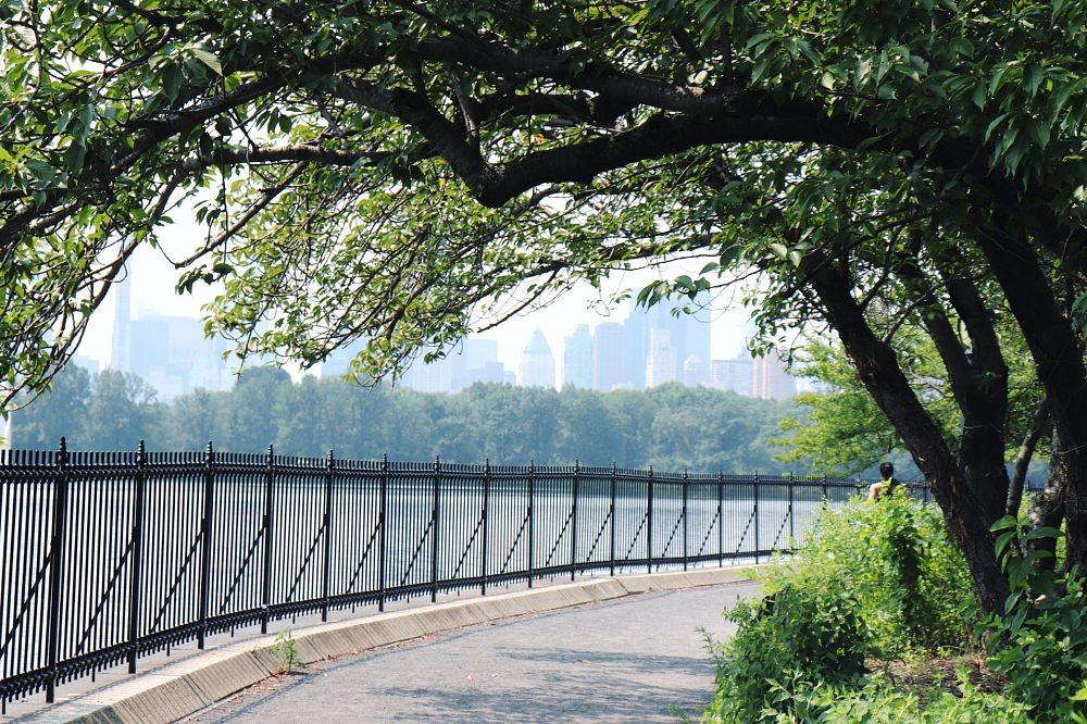 Photo in Travel #centralpark #newyork #park #photography #bigapple