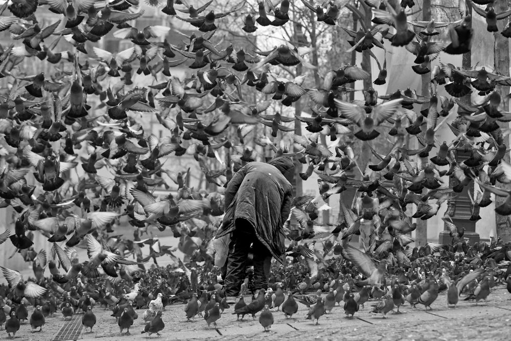Photo in Street Photography #paris #france #beaubourg #pigeons #noir et blanc #street photography #photographie de rue #giuseppe