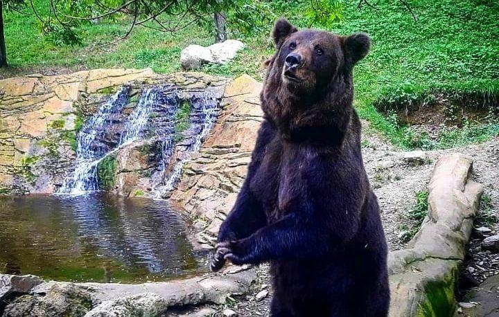 Photo in Random #bear oso