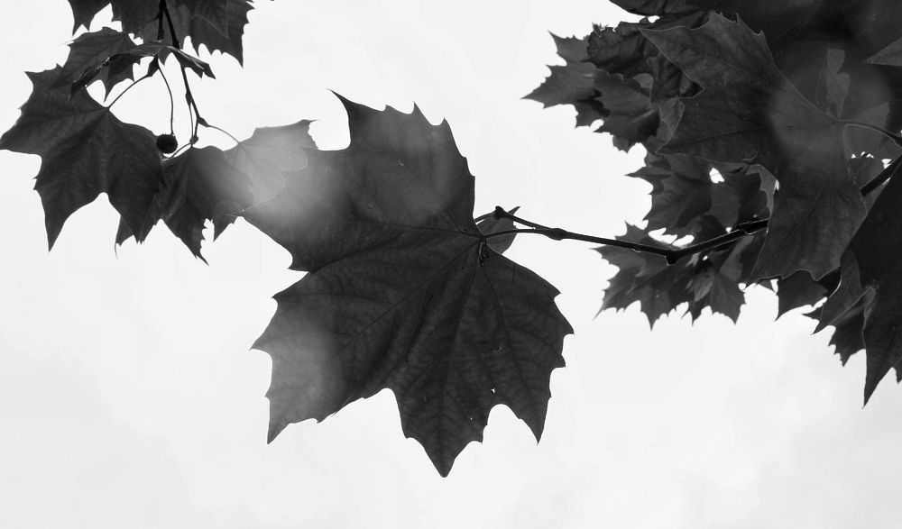Photo in Nature #leaf #rain #monochrome #black and white #sky #angle #different angle #abstract #autumn #weather #england