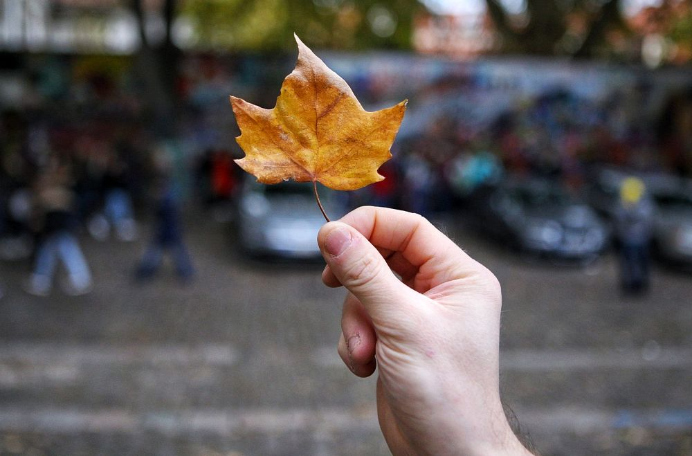 Photo in Nature #leaf #autumn #colour #aperture #nature #street