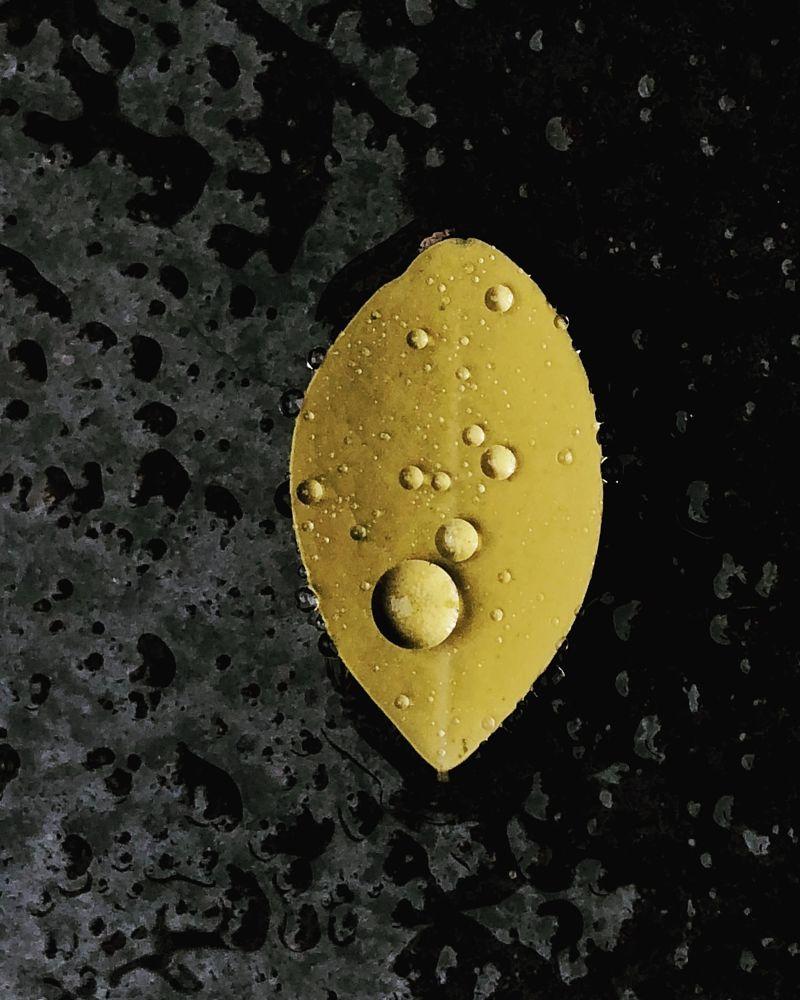 Photo in Random #rain #leaf #drops #mobile #yellow