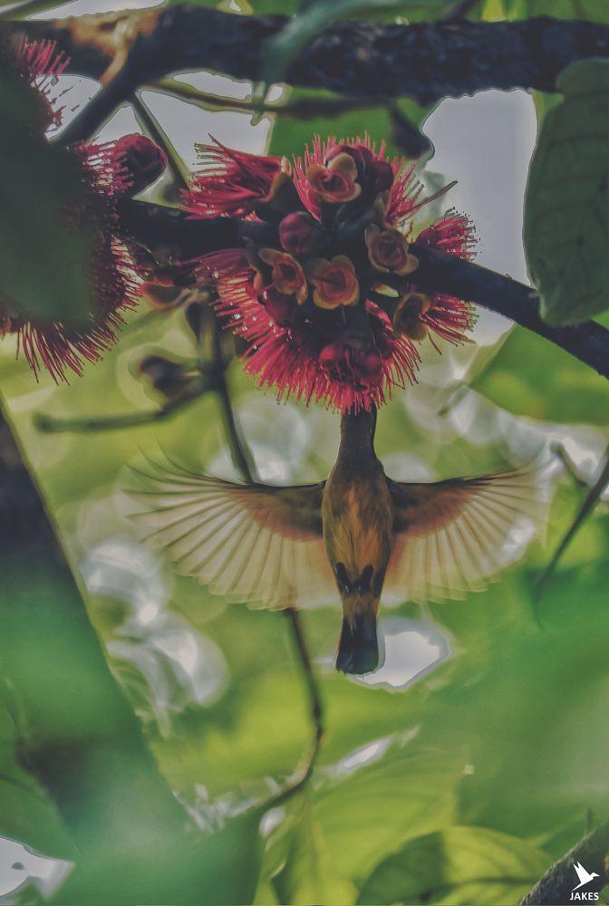 Photo in Nature #bird #flower