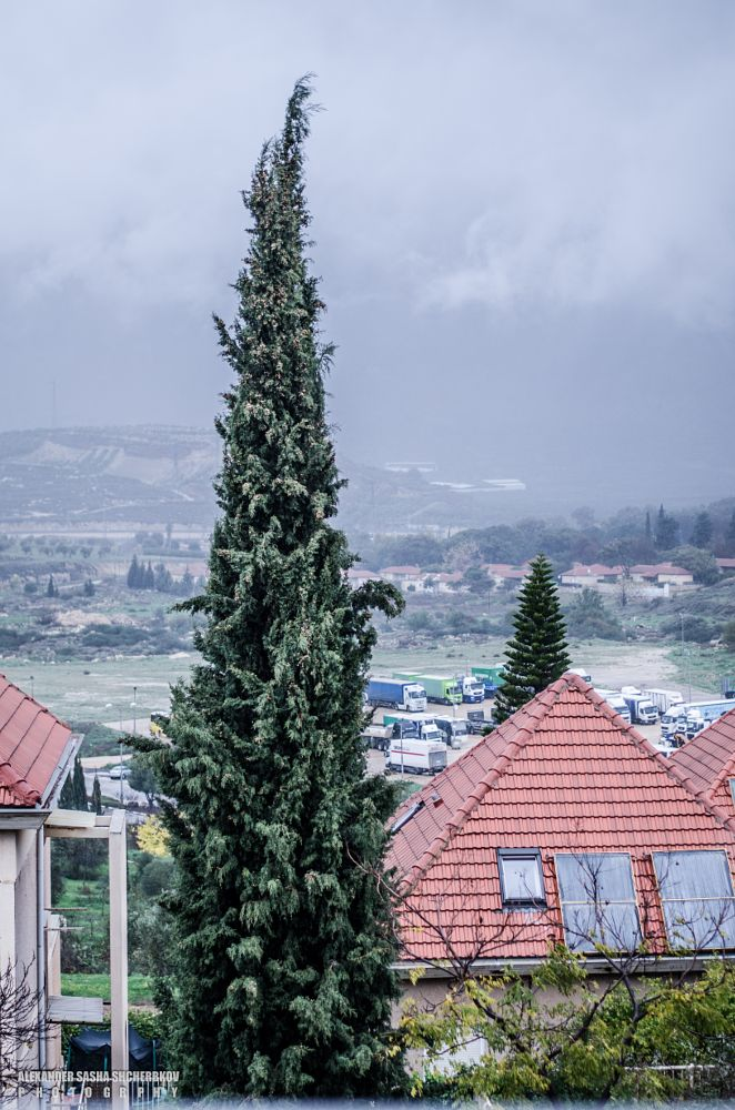 Photo in Nature #winter #tree #green #tall #cold #rain #raining
