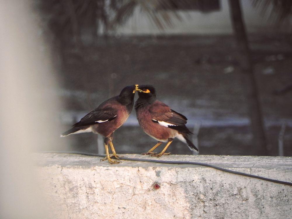 Photo in Nature #valentine's day #birds #sky #love birds