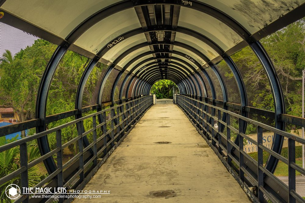 Photo in Street Photography #street #transportation #overpass #road #green #architecture #florida #miami