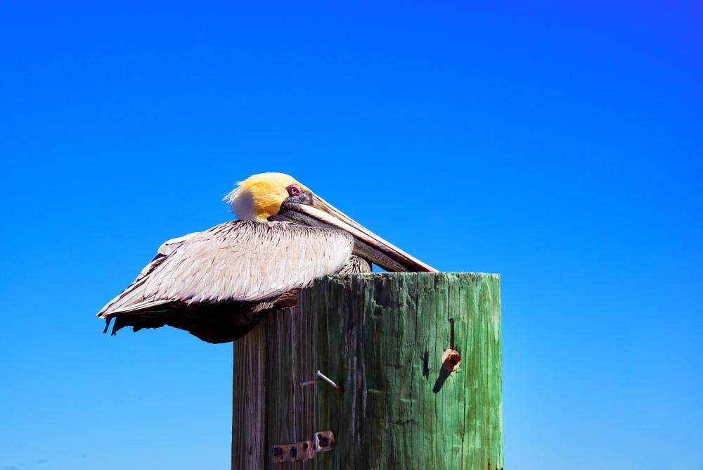 Photo in Animal #animal #bird #flight #tropical #ocean #sea #nature #feathers