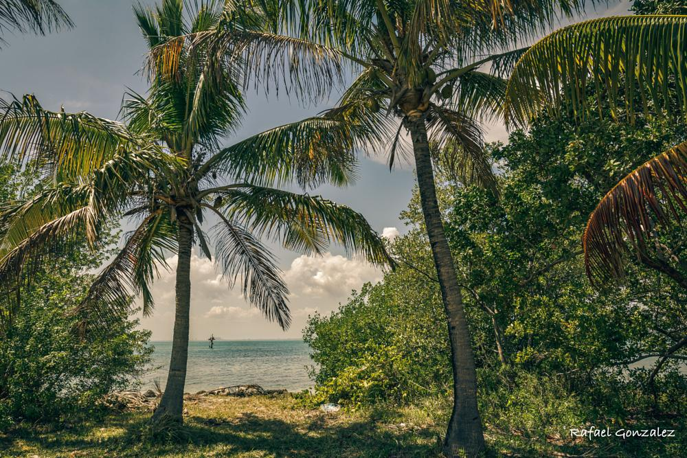 Photo in Landscape #palms #cocomuts #trees #ocean #sand #tropical #sun #nature
