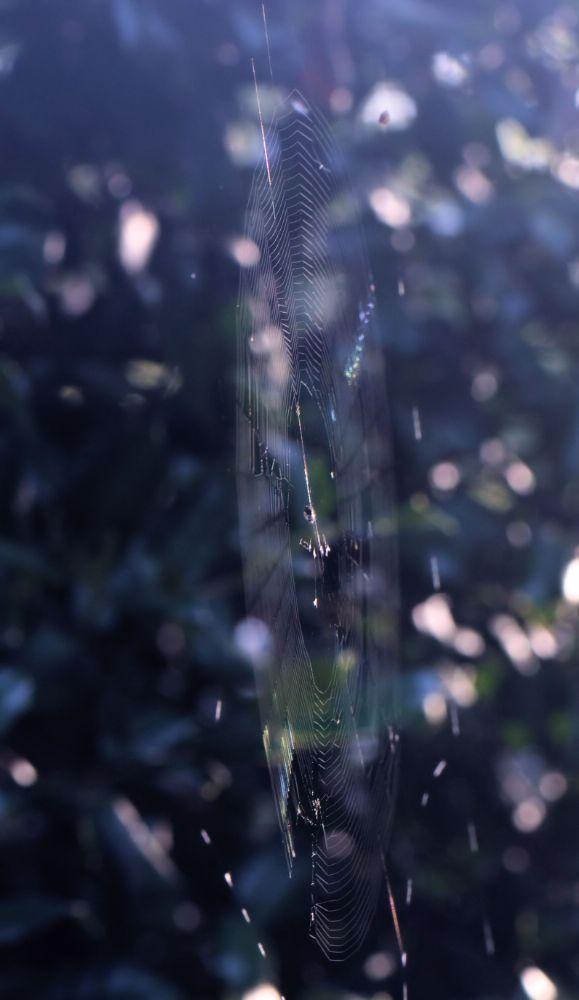 Photo in Macro #spider #web #jtsps25 #nature