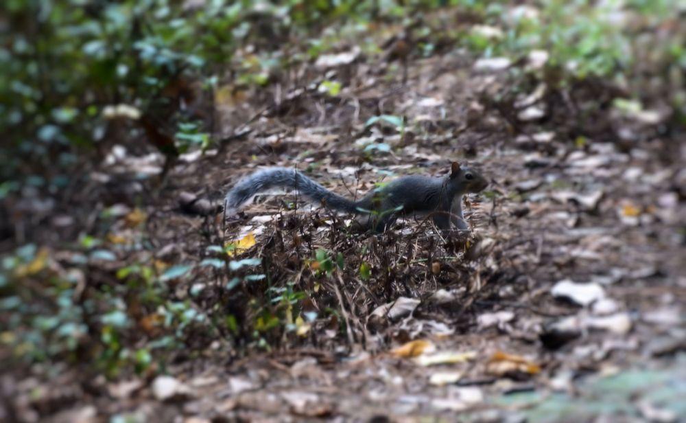 Photo in Nature #squirrel #animal #jtsps25