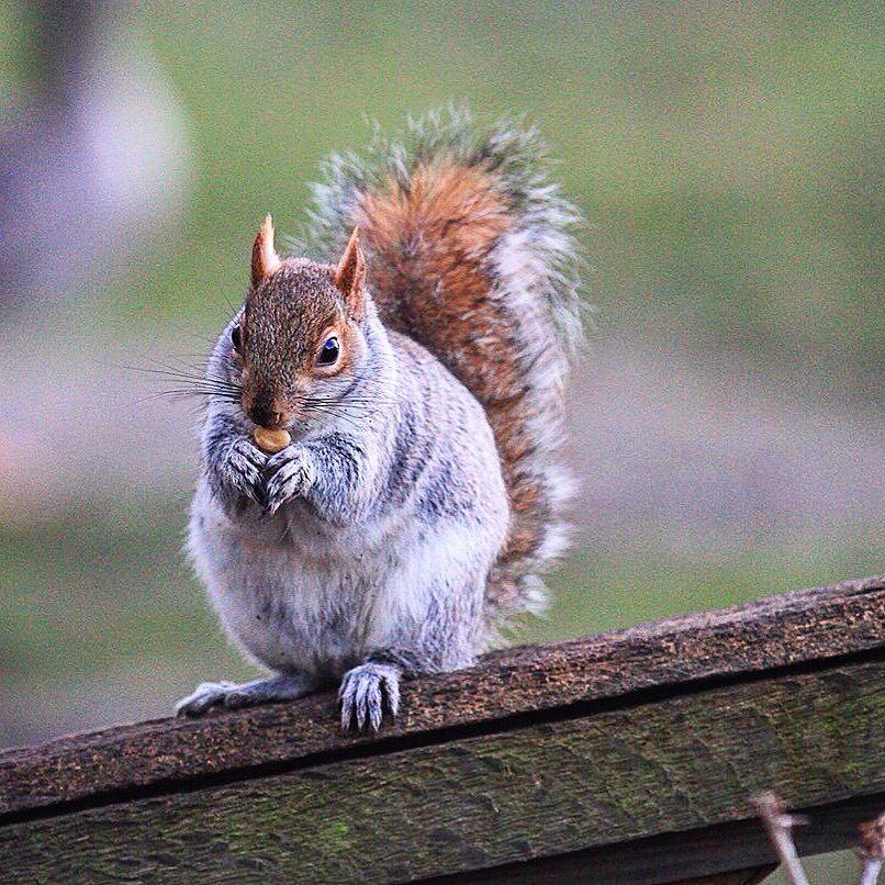 Photo in Random #wildlife #amazing #squirrel #cute #sexy #beautiful