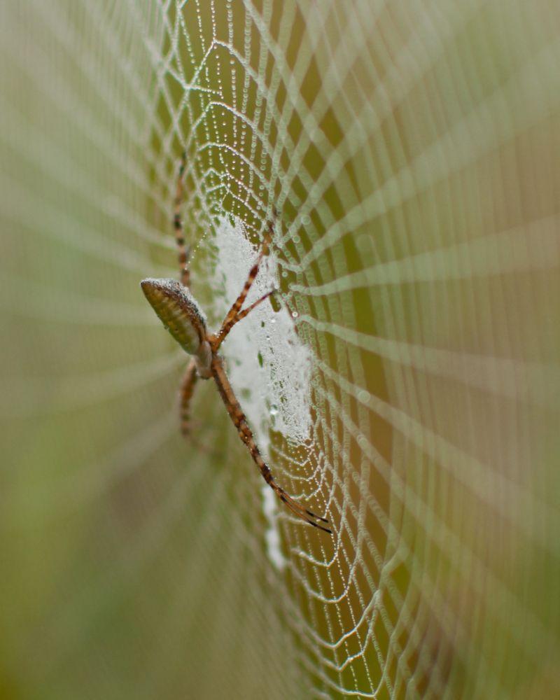 Photo in Nature #spider #dew #creepy #legs #web