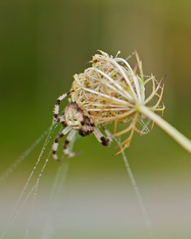 Photo in Nature #spiders #legs #colorful #morning #dew
