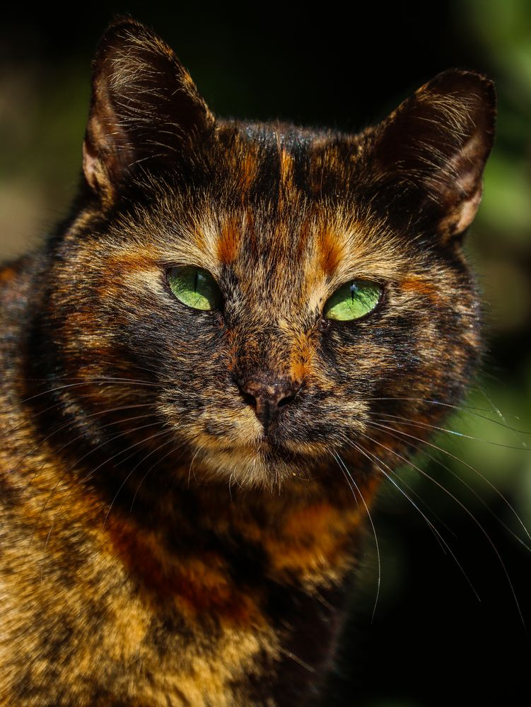 Photo in Animal #cat #portrait #animal