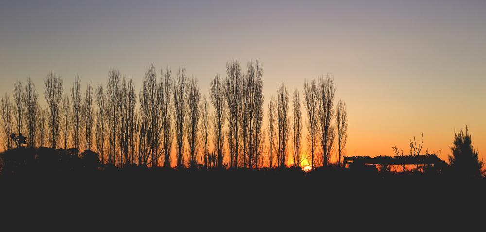 Photo in Landscape #canon #colors #sunset #sun #shadows #sky #tree #beautiful #landscape #nature