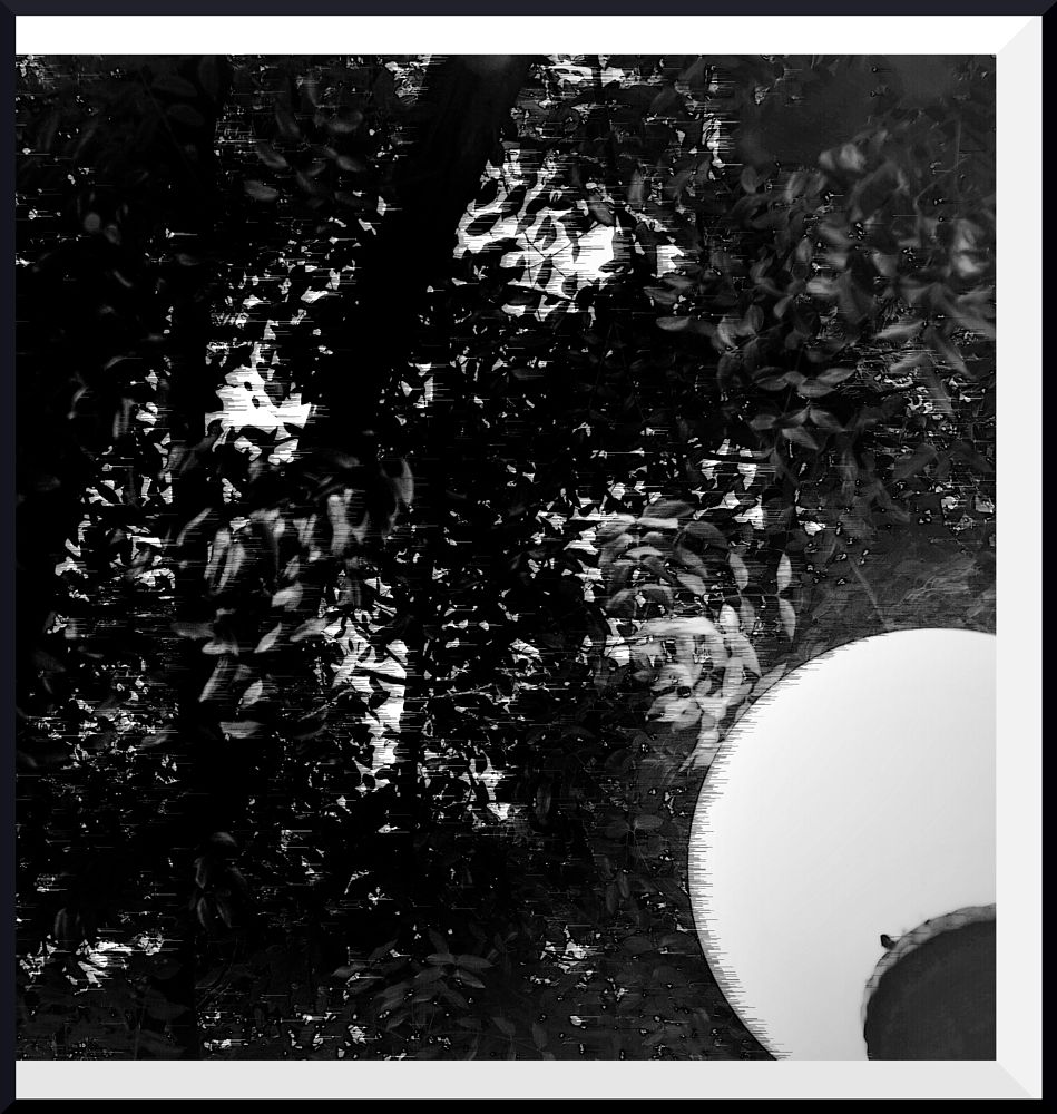 Photo in Black and White #black and white #abstract #san juan puerto rico #lamp #trees #shadows #light