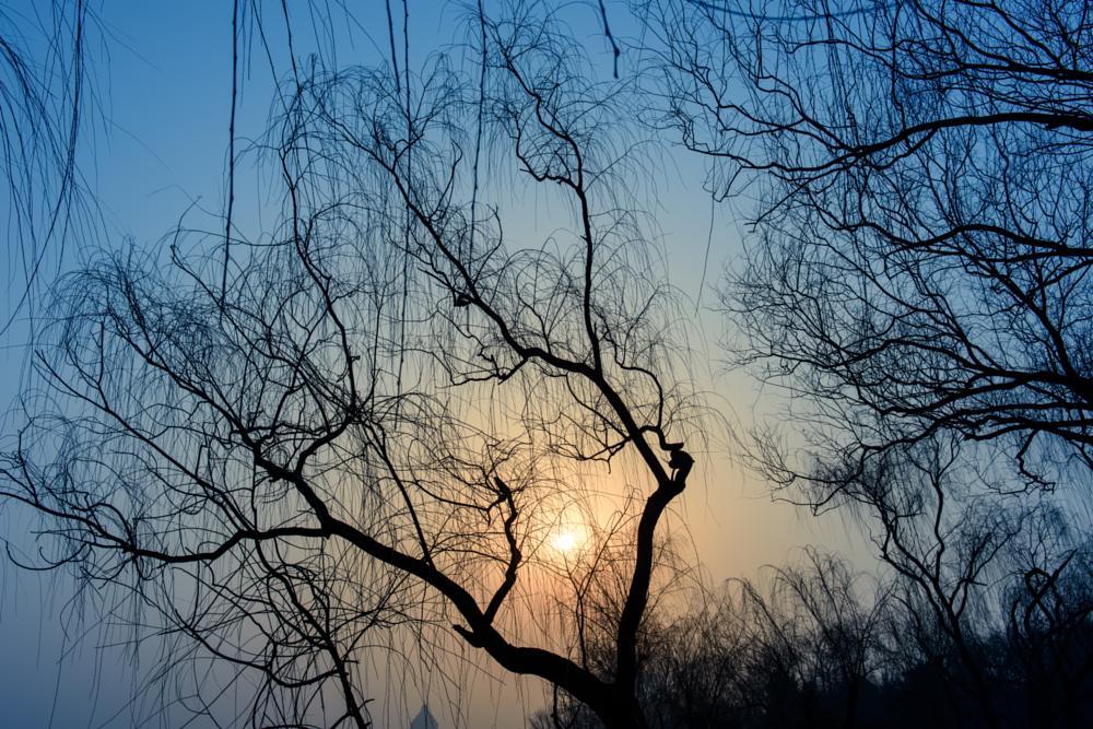 Photo in Landscape #beijing #landscapes #morning #sky #sun #sunrise #trees #北京