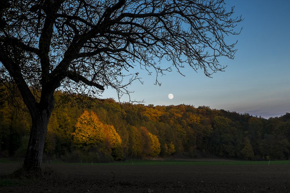 Photo in Landscape #autumn #evening #moon #light #colors #fjeril #transition #change #forest #tree