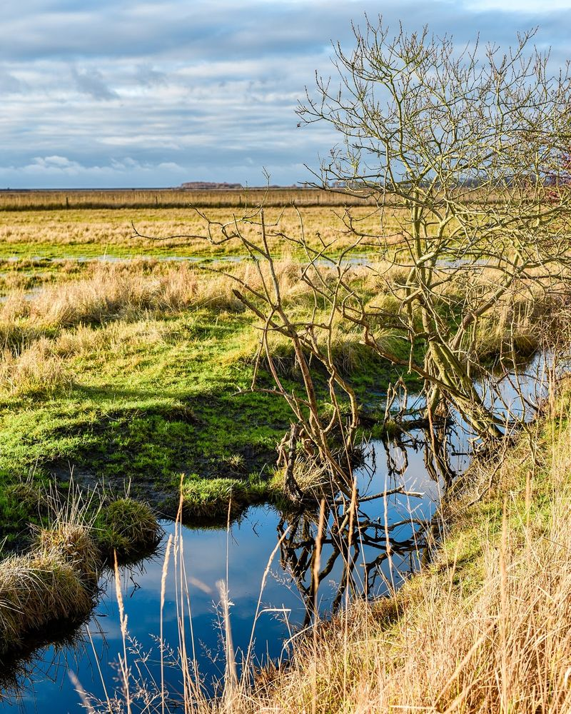 Photo in Random #landscape #grassland #blue #sky #reflecting