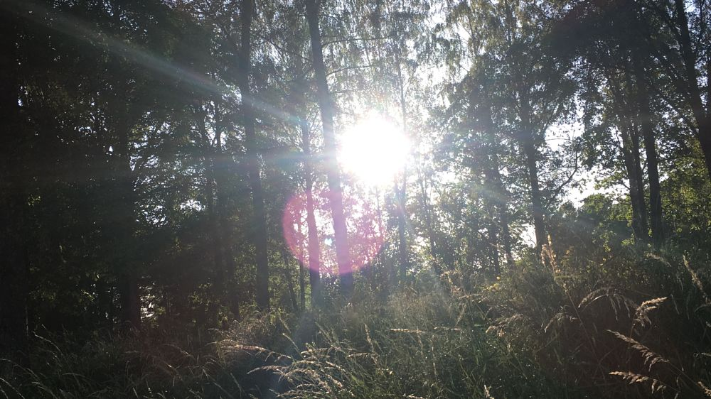 Photo in Nature #photo #nature #sky #sol #summer #sommer #naturelove