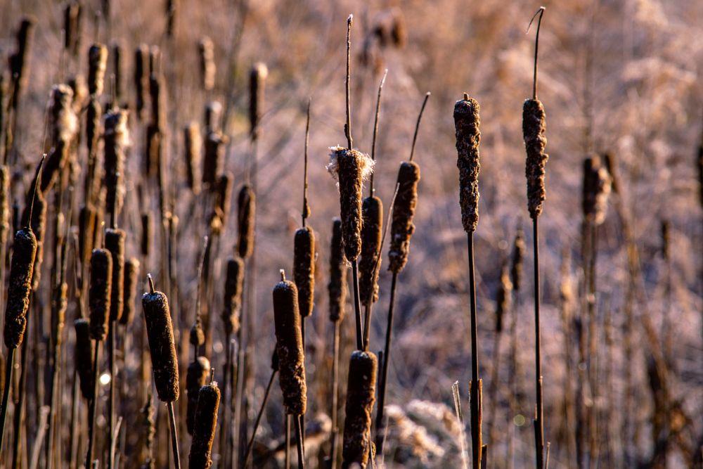 Photo in Nature #nature #nikon #frost #frosty #sunrise #sun #morning #prairie #macro #moody #mood #folk #hike #hiking #rural #wetland #marsh