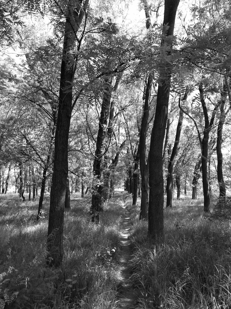 Photo in Black and White #path trees forest blackandw