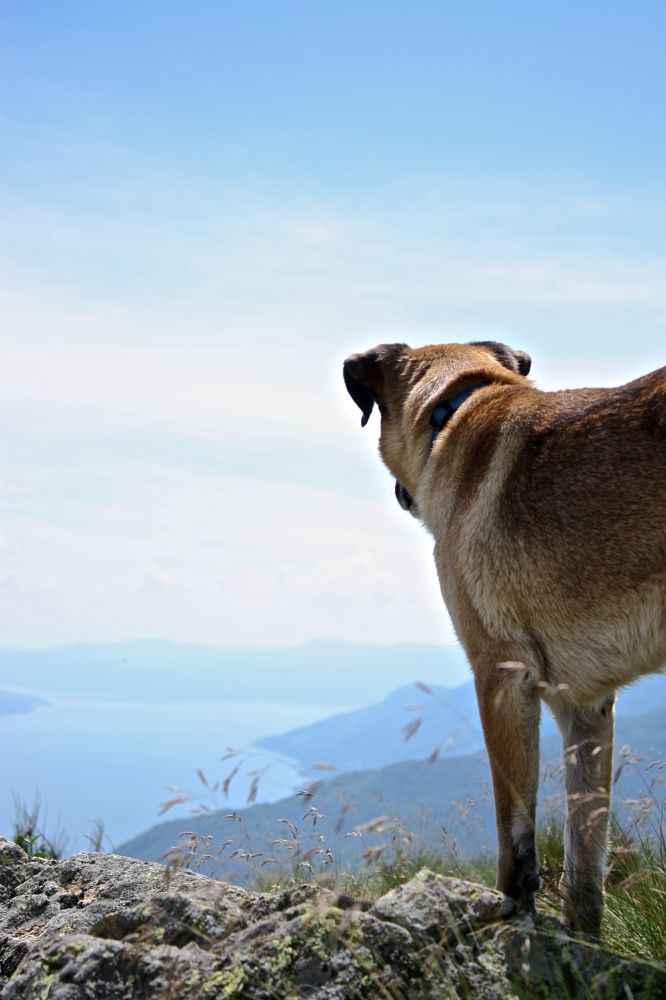 Photo in Landscape #dog #point of view #landscape #views #lake maggiore #animal #on the top