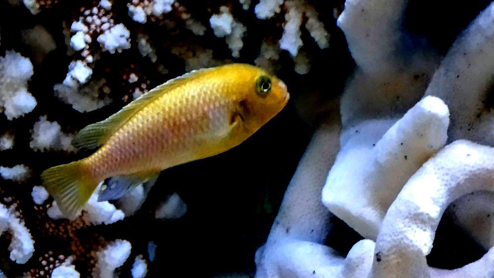 Photo in Nature #fish #water #aquarium