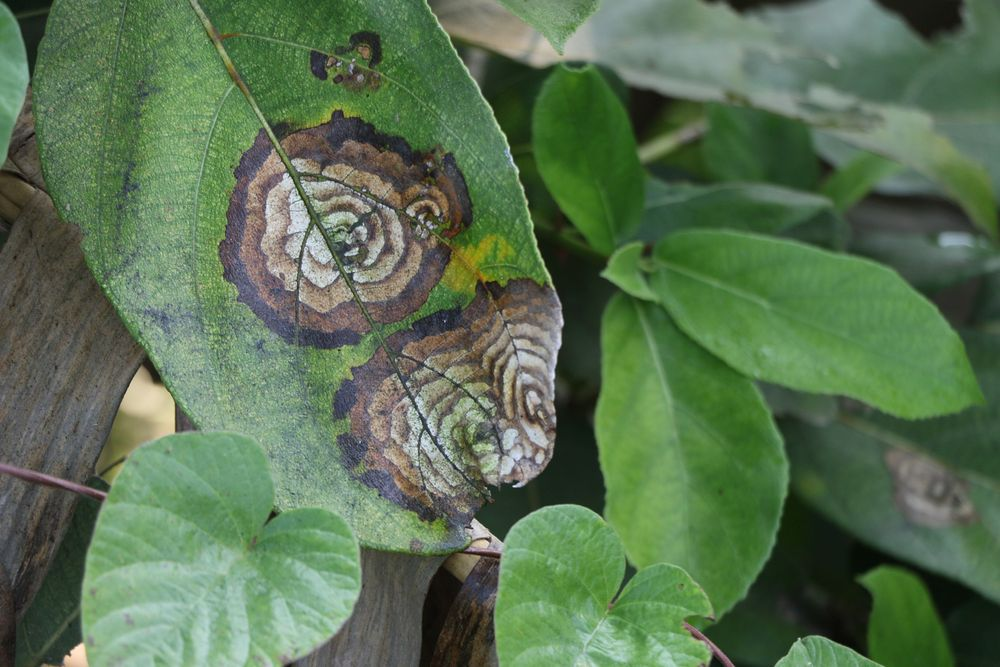 Photo in Macro #macro #leaf damage #plants on road side #rural