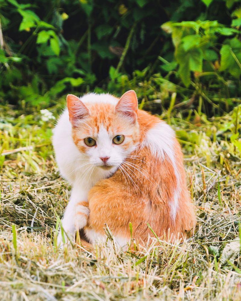 Photo in Animal #animals #cat #pets