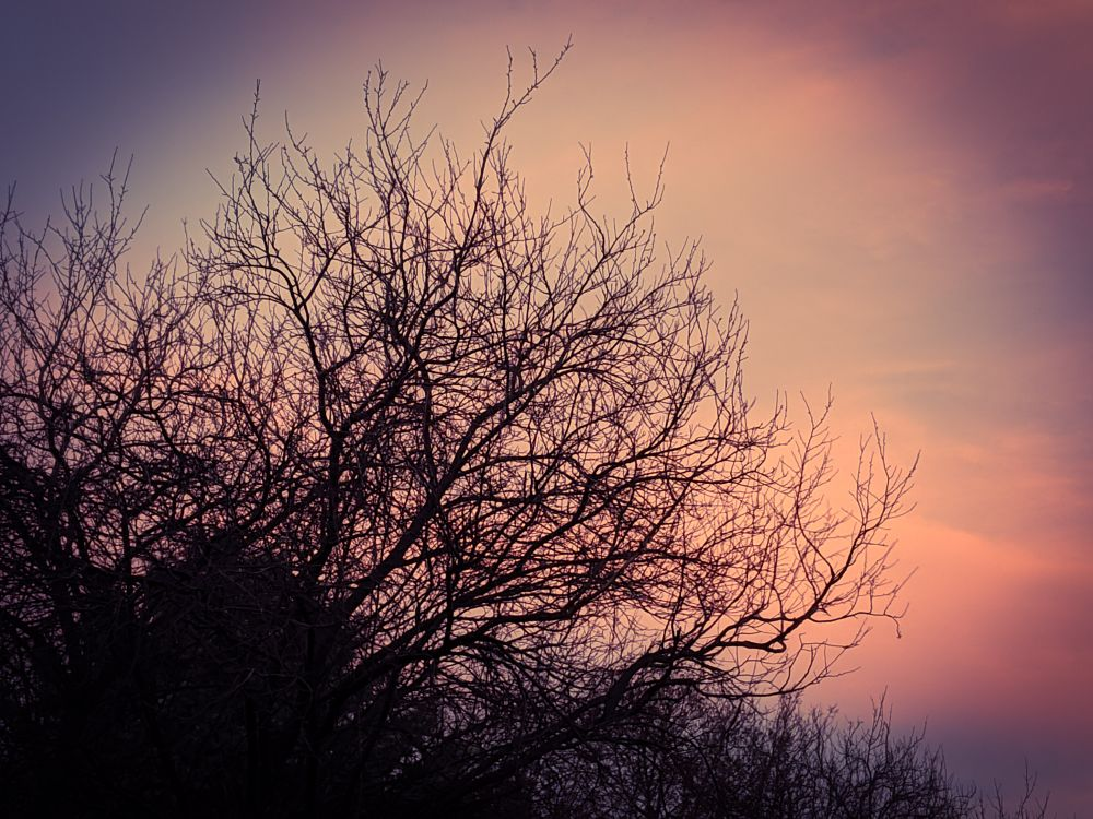 Photo in Landscape #sunsetskycoloursoftwinter