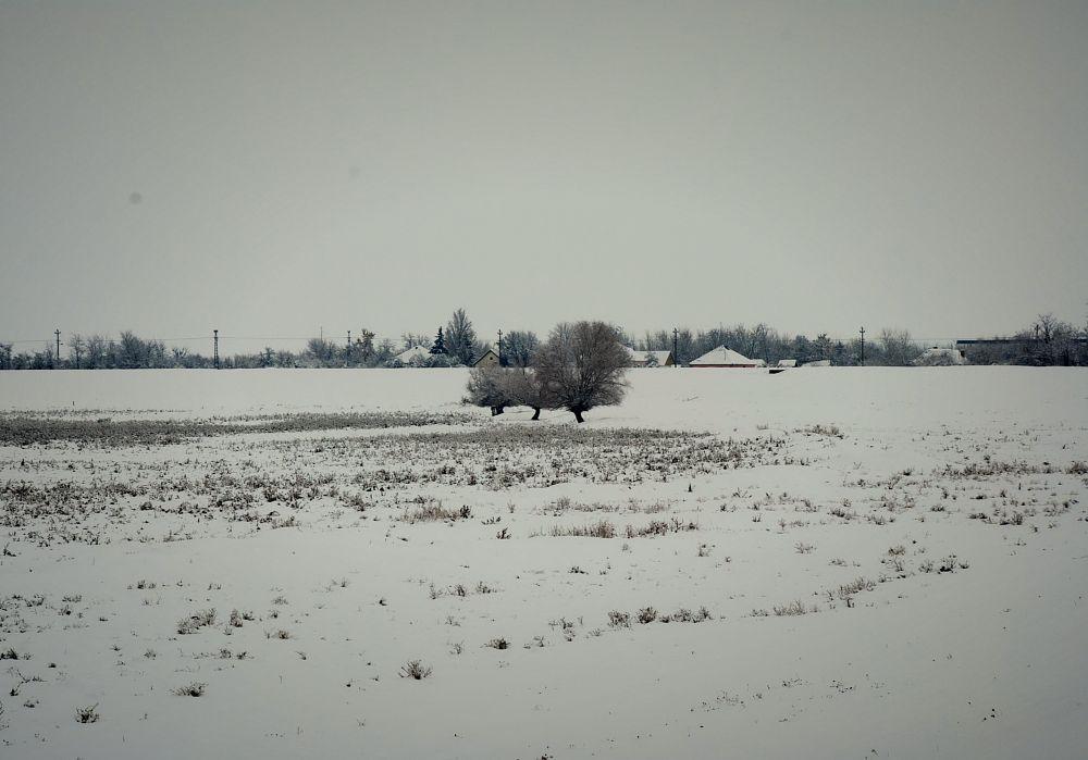 Photo in Rural #ice #snow #white #tree #village