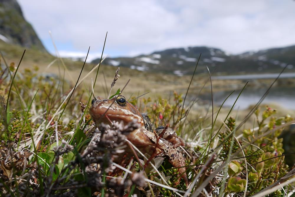 Photo in Nature #frog #norway #frosk