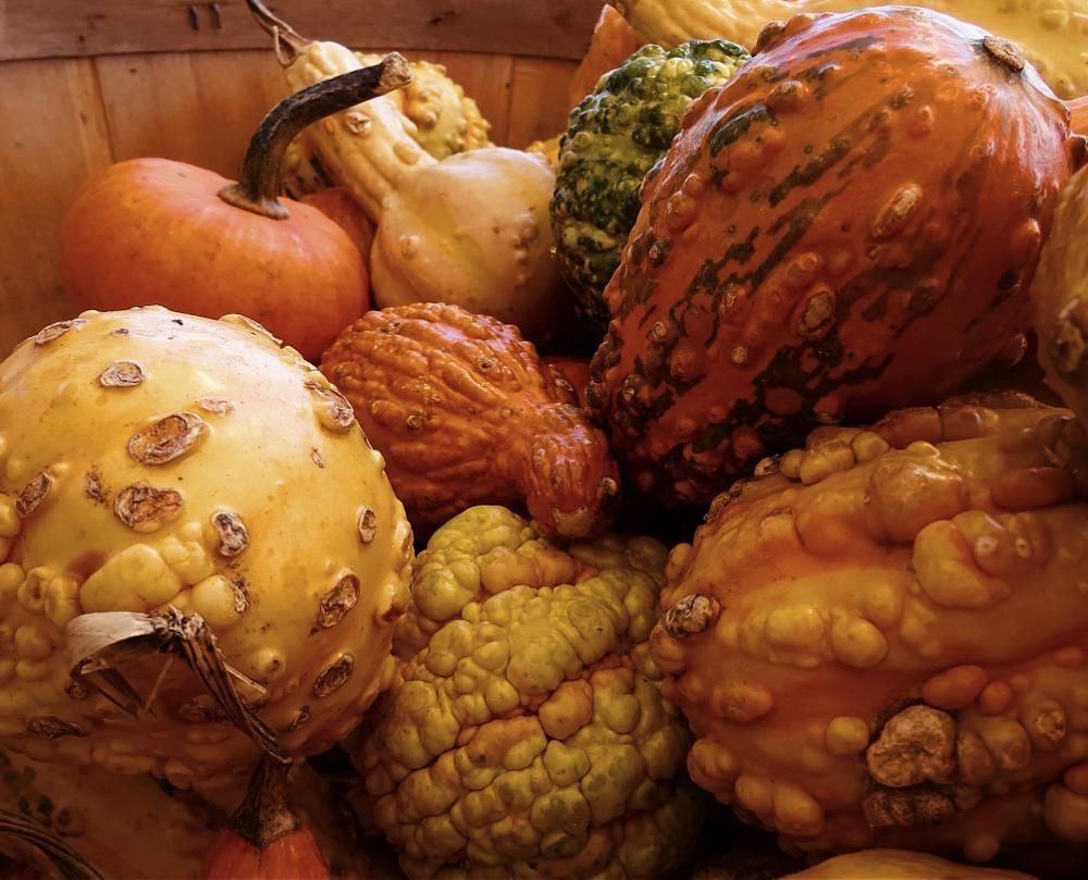 Photo in Still Life #gourds #autumn #orange