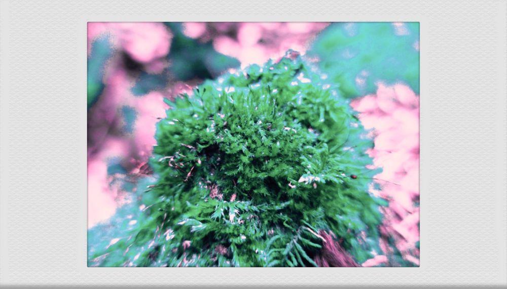 Photo in Nature #nature #hiking #film #polaroid #lomo