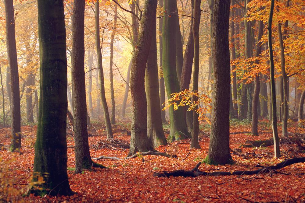 Photo in Nature #herbst #autumn #wald #forest #wood #trees